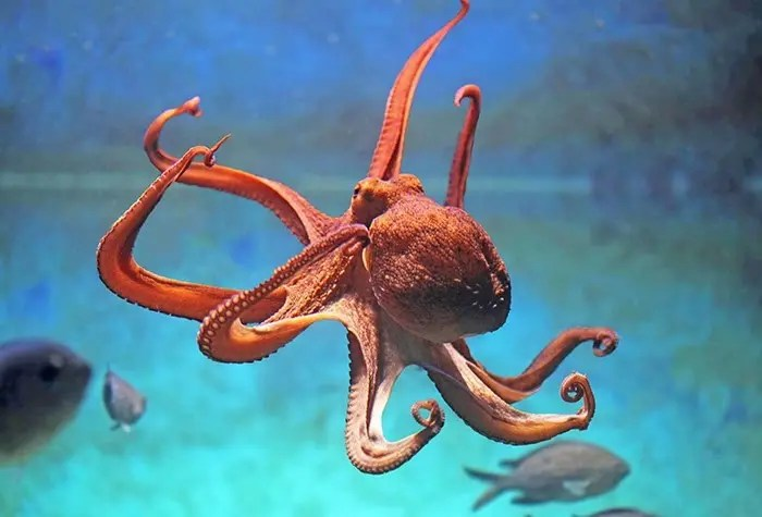 Animal totem la pieuvre : Symbolisme