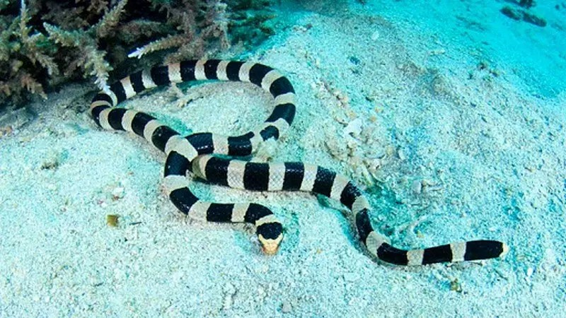 animal totem serpent
