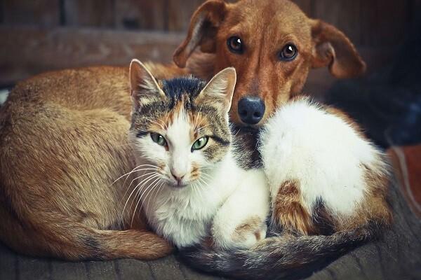 Souvent les animaux sont plus humains que la plupart des gens