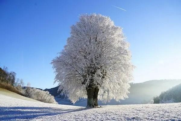 image neige soleil