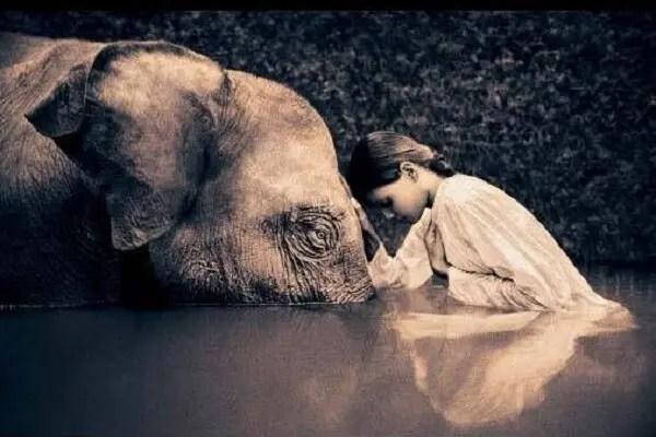 namasté elephant