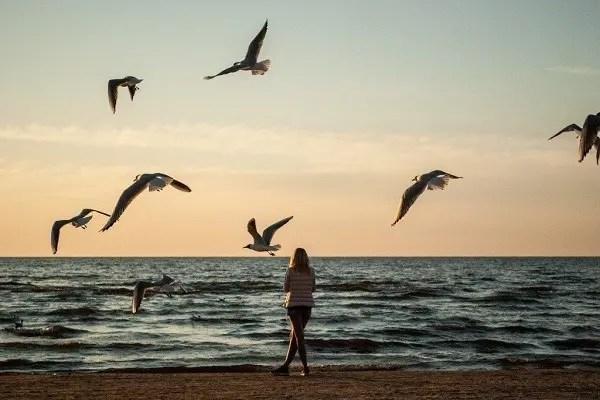 plage et oiseaux