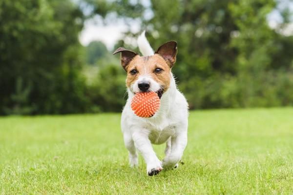 Comment bien jouer avec son chien ?
