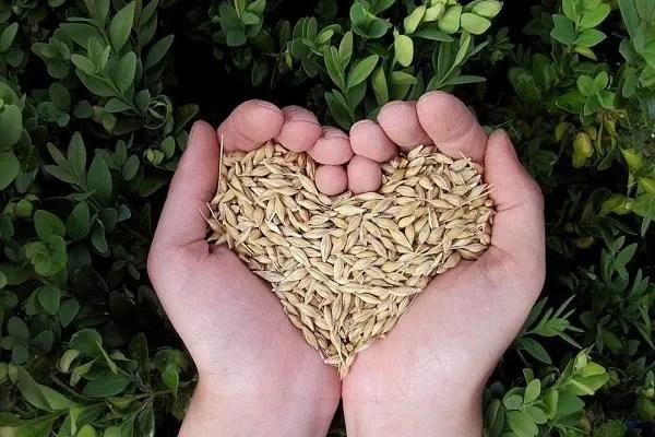 des graines d'amour
