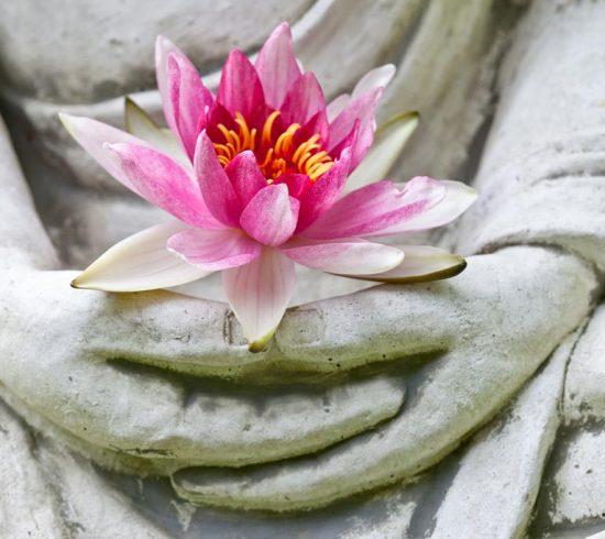 Manos de buda sosteniendo la flor