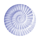 purple-shell
