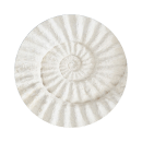 coquille blanche