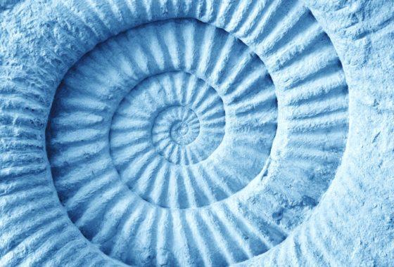 36961310 - azul abstracto hecho de fósil prehistórico de amonita en la superficie