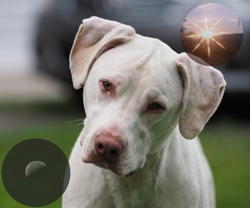 Sun Dog, Moon Dog