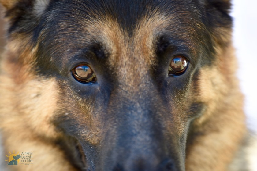 A dog's short life span