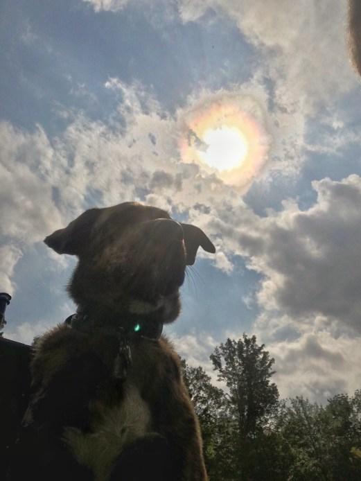 Sun Dog  Bhakti