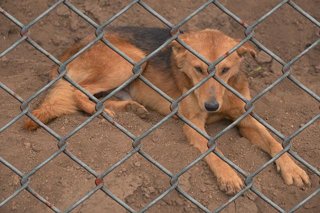 Animal Shelters, Animal Rescue, Animal welfare.