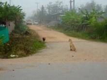Stray dog and chicken.