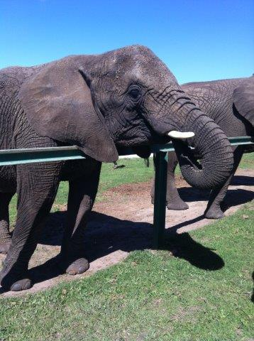 Addiction recovery with wild animals