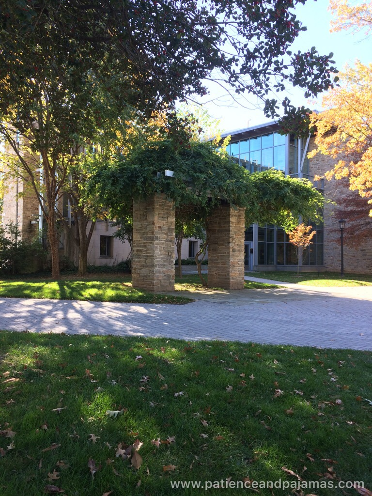 These structures are found all over campus, with beautiful trees seemingly draped over them at Loyola University Maryland