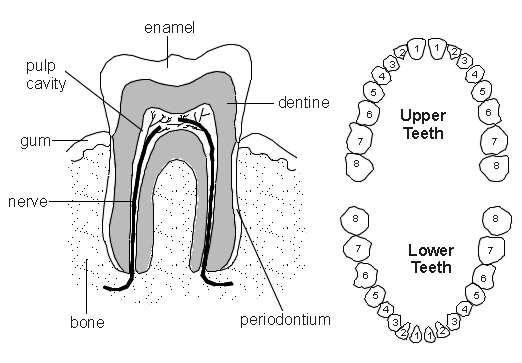 Toothache | Health | Patient