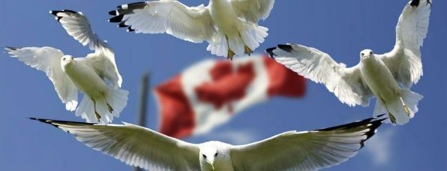 ¿Por qué Canadá es el mejor lugar para tener FQ?
