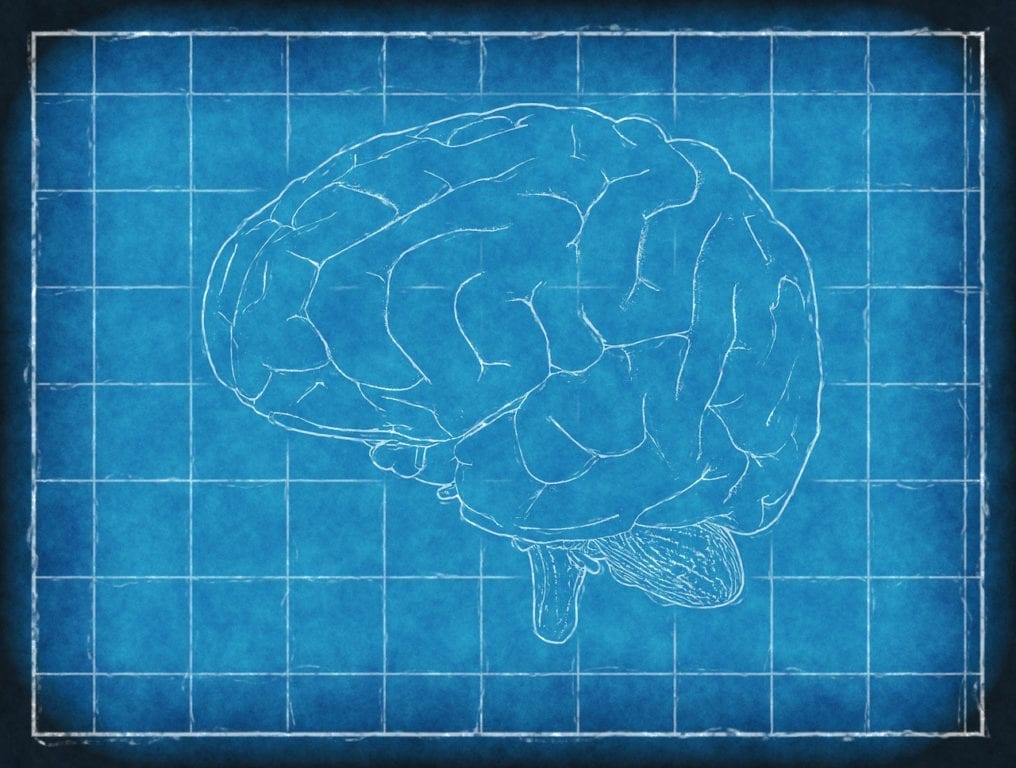 Can Mini-Brains Revolutionize Research?