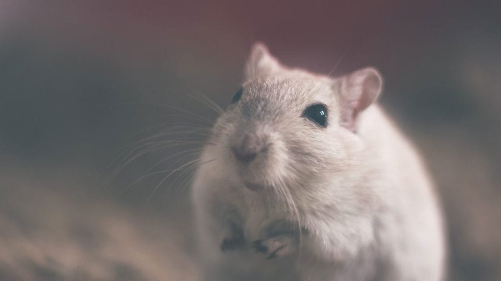 Scientists Have Managed to Create a Mouse Model for Idiopathic Pulmonary Fibrosis