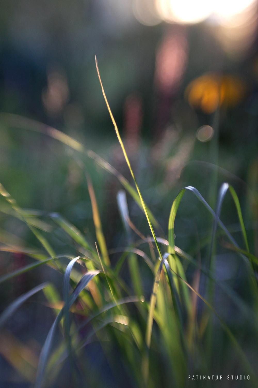 Photo art   Abstract close-up of garden in evening sun.