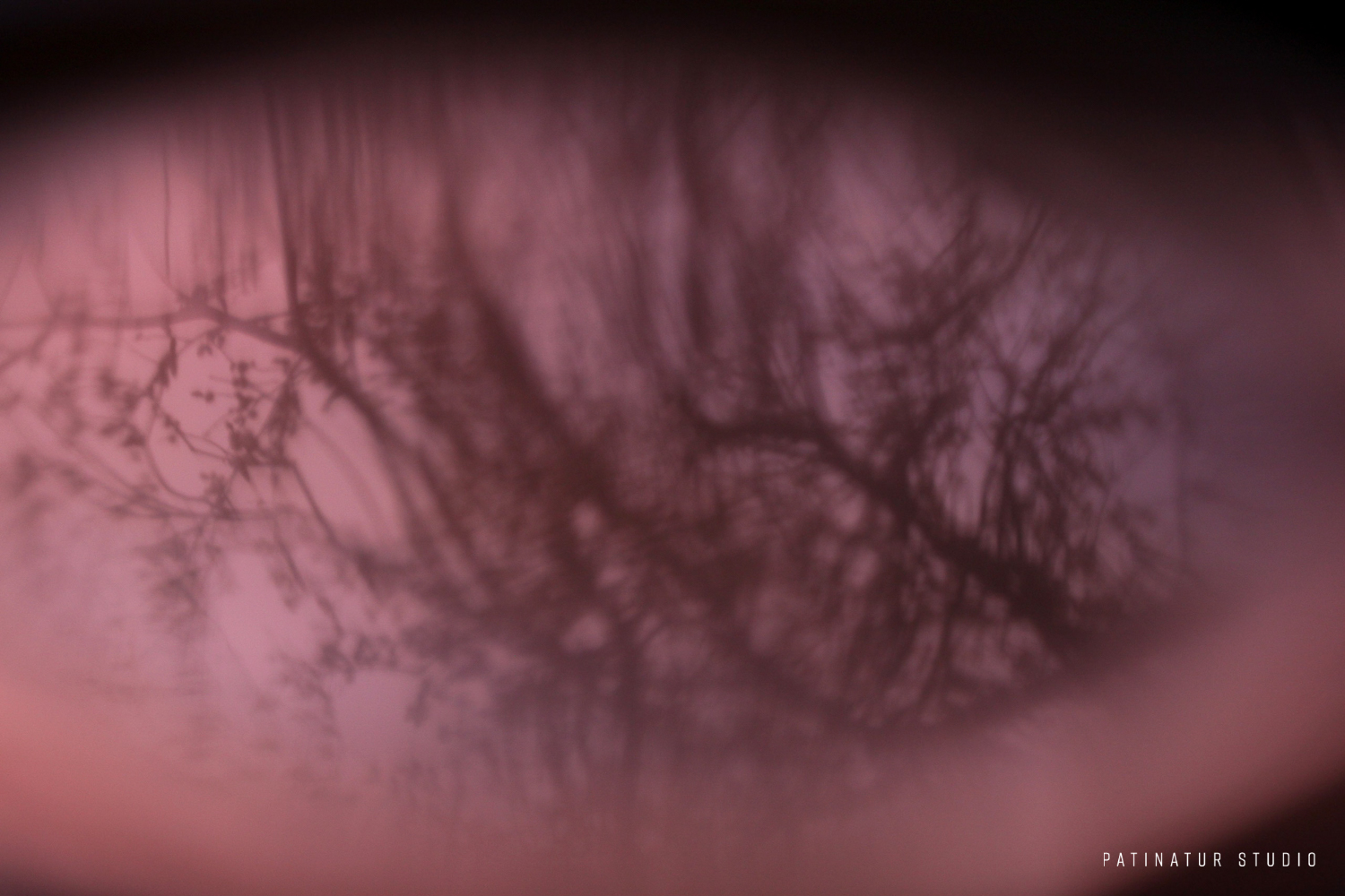 Photo art   Abstract close-up of a copper plate with the reflection of a willow tree in the sunset.