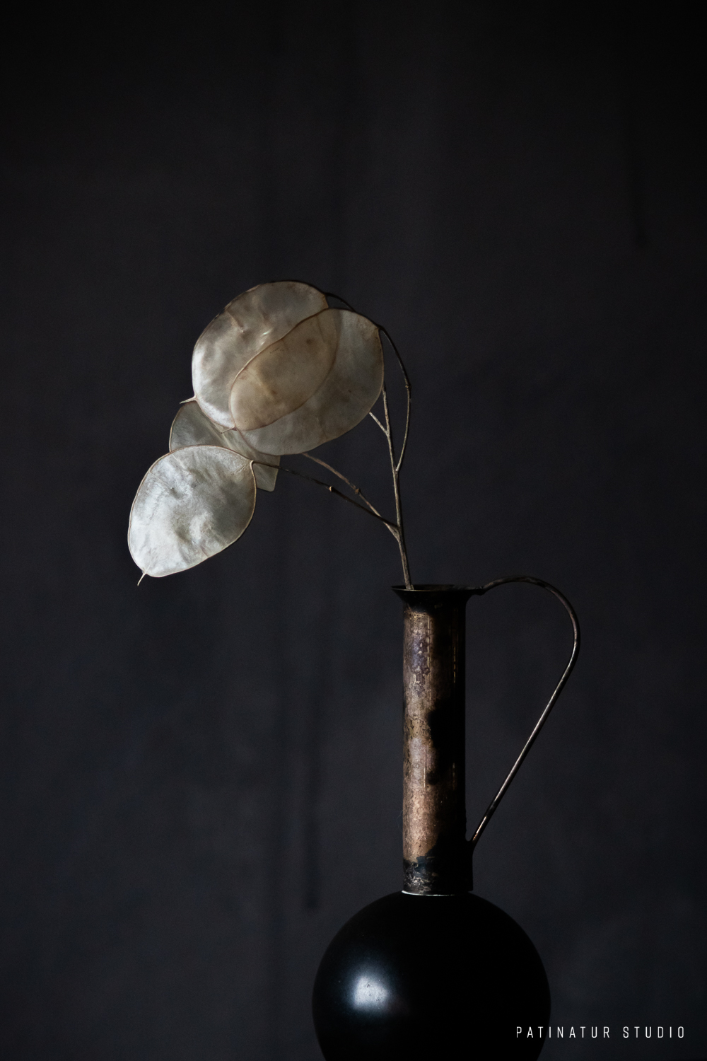 Photo Art | Dark and moody seedhead still life with Annual Honesty silicle