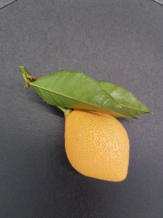 לימון של סדריק גרולה. צילום: ליאורה פרי