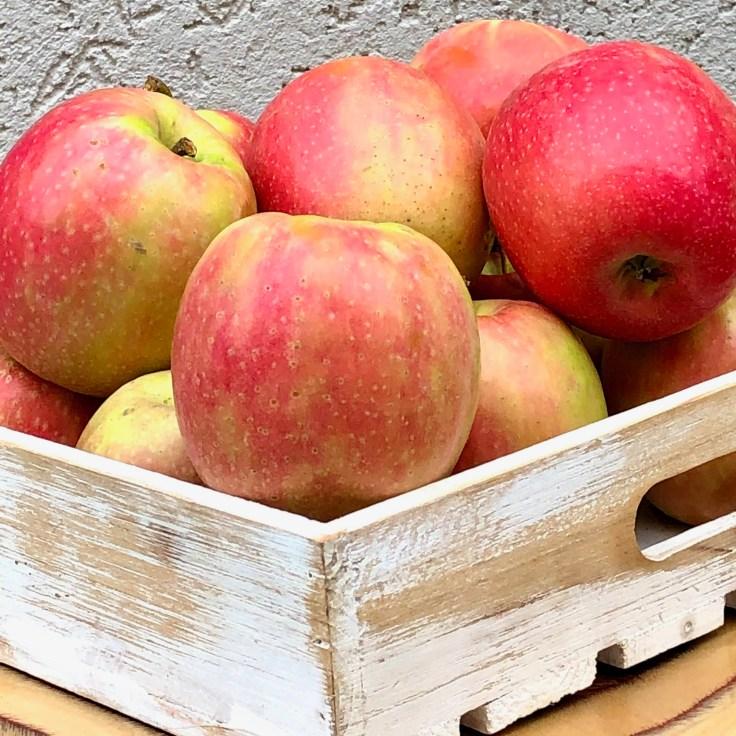 תפוחי פינק ליידי