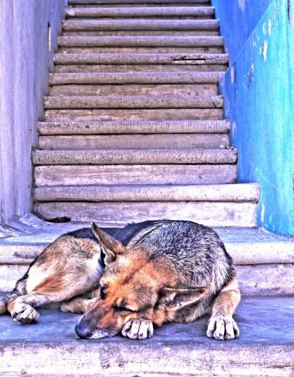 SAyulita dog and stairs