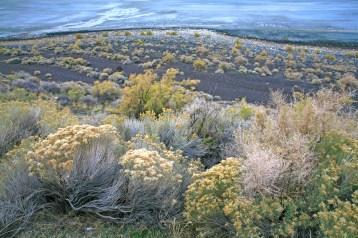 Rabbit Brush & Sage, Lake Abert