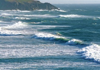 bandon gull and wave