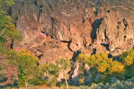Canyon Wall & Black Poplar,Owyhee River