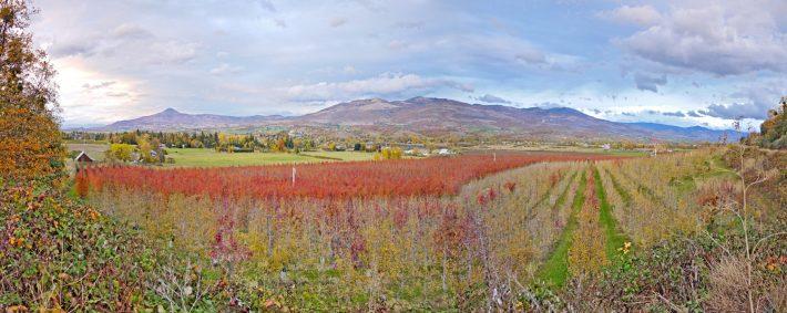 Autumn Brilliance, Rogue Valley