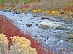 sprague river close up