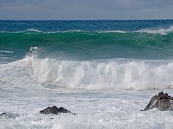wave w gull