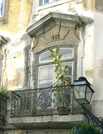Balcony & Plant Lisbon