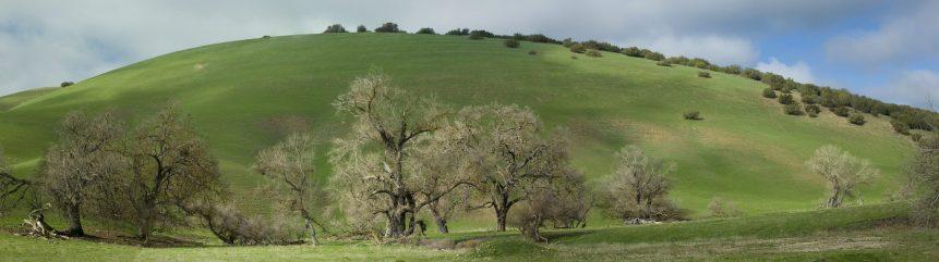 Carrizo oaks and green hill ca pano