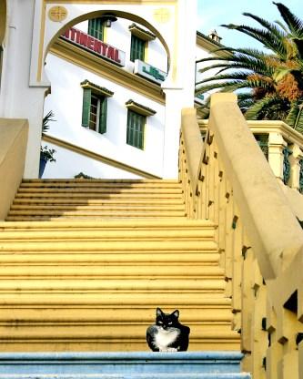 Cat & Hotel Tangiers