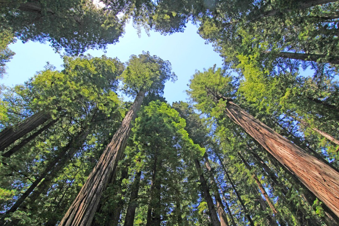 Images of Trees and Plants : link to gallery of images of redwood trees and Redwood National Park images by Pat Moore Photography