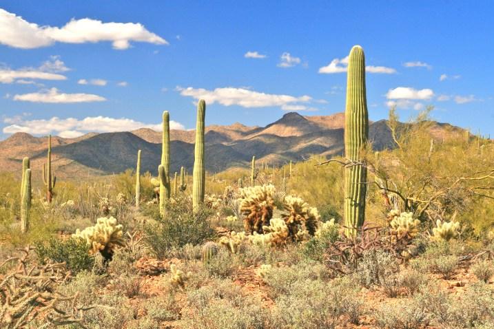 az sajuaro sky cholla cactus LS mountains