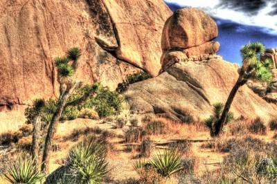 ca joshua tree w rock knob copy (1)
