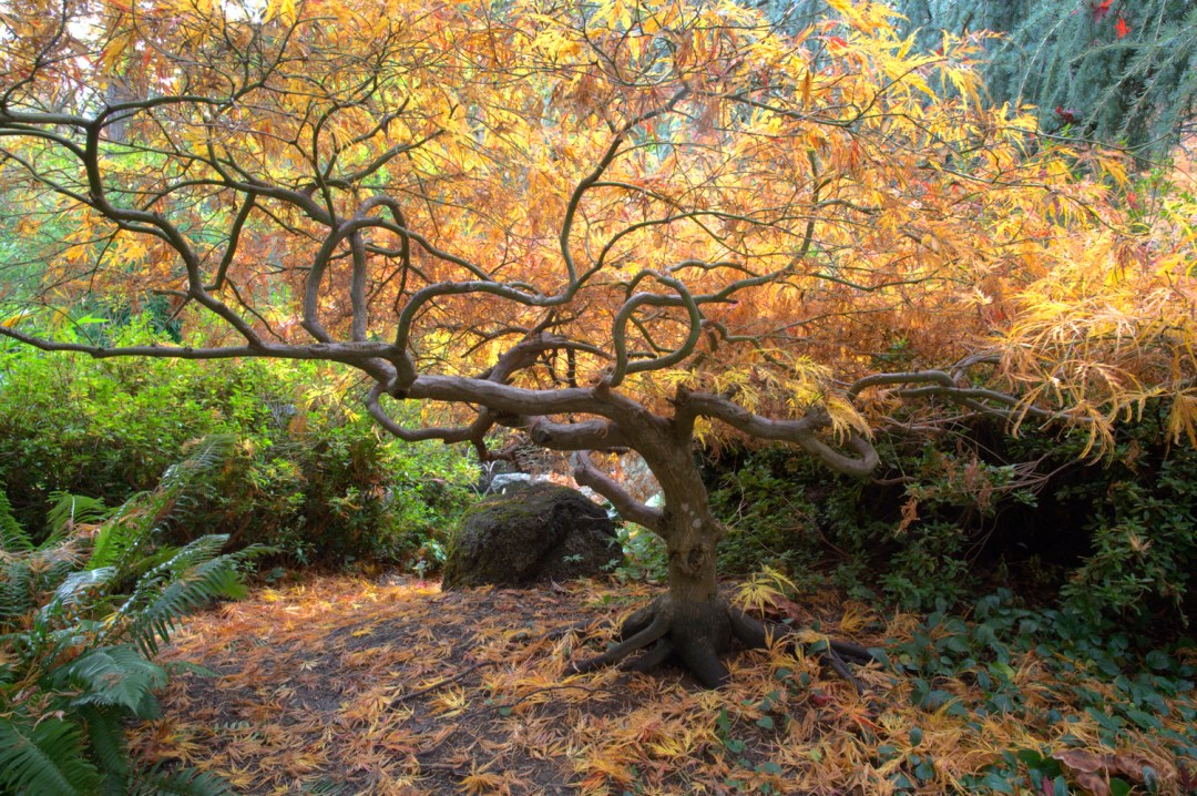 Images of Trees and Plants : link to portfolio gallery with images of gardens and parks by Pat Moore Photography