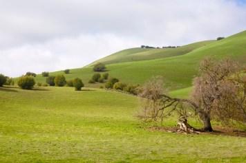 hills shrubs broken oakcarrizo