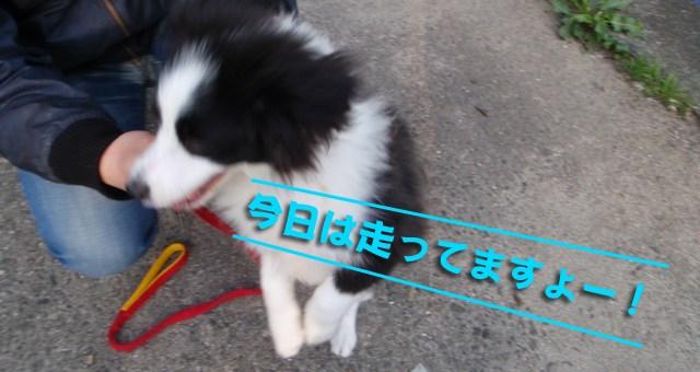 ソラちゃ〜〜んキター!