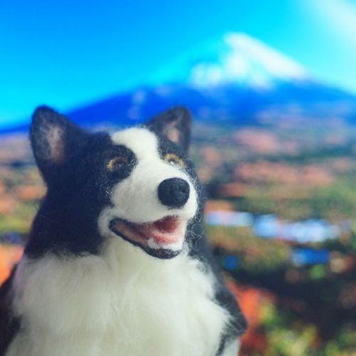 Instagramの犬友さんからパトンの羊毛フェルト人形が届きました。そっくりでパトンが帰ってきたみたいです。本当にありがとうございます。