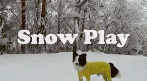 昨日の雪遊びの動画。パクチーが楽しんでるのが伝わってきます!#雪遊び#パウダースノー