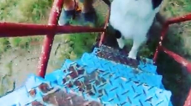 滑り台の急な階段を登っちゃいますよ。朝散歩のロングバージョンはIGTVで見てくださいね。#パクチーのナレーション
