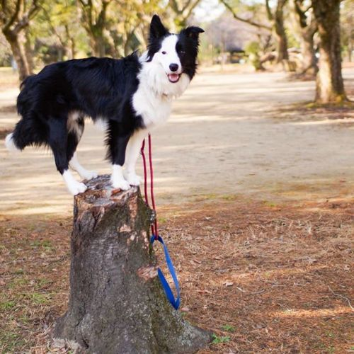 今日はいい天気!#ノリノリ犬 #dogontop #onthetop