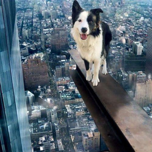 ここは流石に高すぎるよね。#ノリノリ犬 #dogontop #onthetop