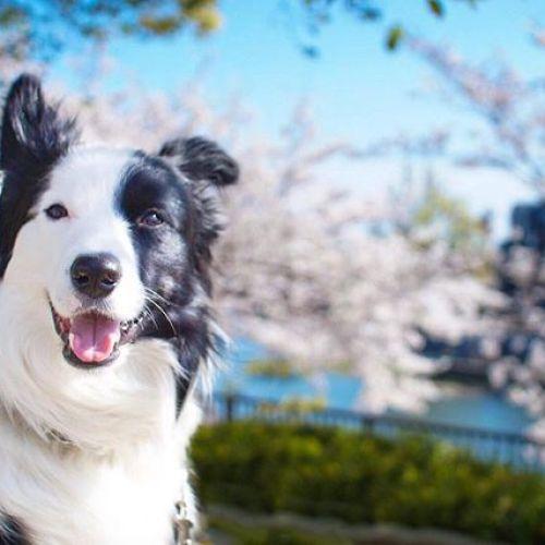 桜の写真まだまだ出しちゃいますよ!#桜
